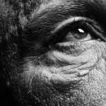 Sandro Miller, Bill Brandt / Eyes (1960-1964) (B), 2014