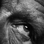 Sandro Miller, Bill Brandt / Eyes (1960-1964) (D), 2014